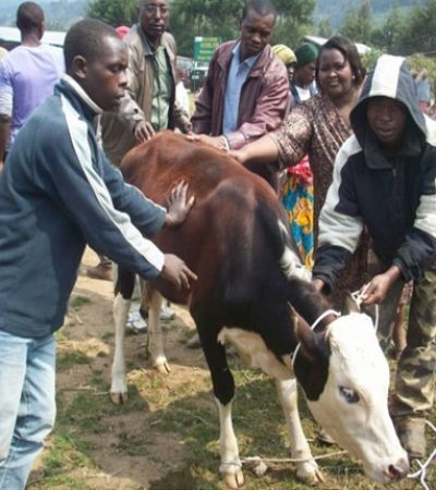 saferrwanda-home-soloar-biogas2